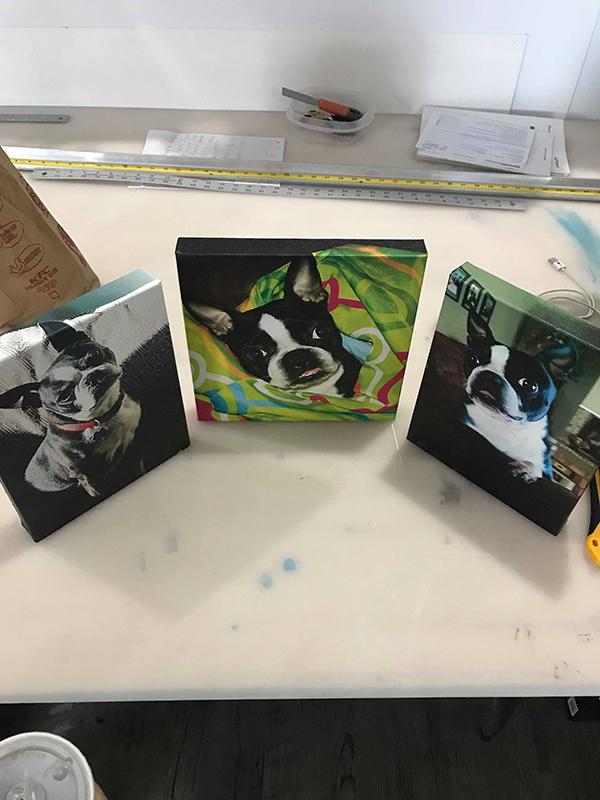 canvas-puppies-600-800